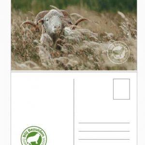 DutchMerino Ansichtkaart